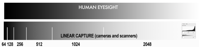 LinearCapture Eye-Camera