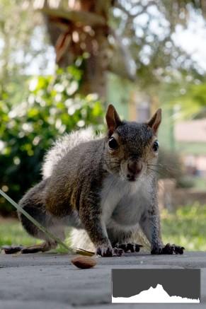 Squirrel6-JPEG-Levels