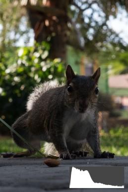 Squirrel6-Original JPEG