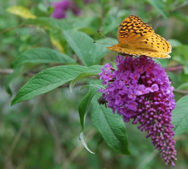 DOF Butterfly