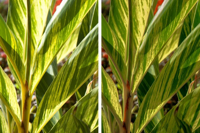 Green Plants-JPG-RAW